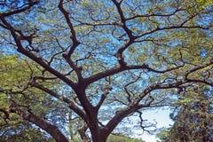 Underview de ramas y de hojas coloreadas contra el cielo azul Foto de archivo libre de regalías