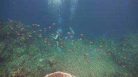 Underwate водолаза акваланга видеоматериал