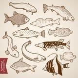 Underwate disegnato a mano d'annata del pesce di vettore dell'incisione Fotografie Stock