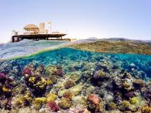 Underwater и разделенный поверхностью взгляд в море тропиков Стоковое Изображение