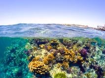 Underwater и разделенный поверхностью взгляд в море тропиков Стоковая Фотография RF