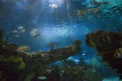 underwater рифа ландшафта рыб коралла тропический Стоковое Изображение