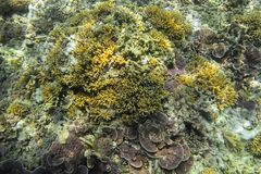 underwater рифа ландшафта рыб коралла тропический Коралловый риф в тропическом море на meno Gili Lombok, Индонесия стоковое фото