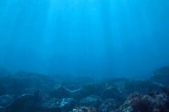 Underwater Royalty Free Stock Image