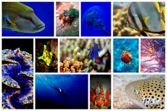 Free Underwater Royalty Free Stock Photos - 18980358
