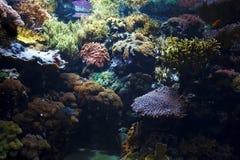 Underwater. Coral reef - underwater sea life Stock Photography