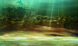 Free Underwater Stock Image - 24408941
