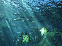 Underwater. Life in the sea Stock Illustration