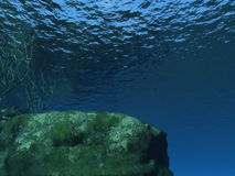 Underwater. Life in the sea Royalty Free Stock Photography