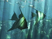 Underwater. Illustration of underwater life in the sea Vector Illustration