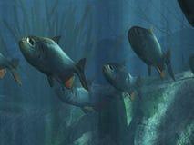 Underwater. Illustration of underwater life in the sea Stock Illustration