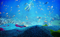 UNDERWATER ABSTRACT CORAL. AND FISH SWIM AND SEA RIFS Stock Photography