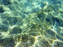 Underwater in the aegean Royalty Free Stock Photography