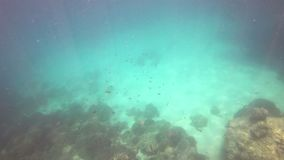 Underwater andaman sea with fish at Phuket.  stock video