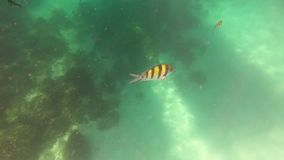 Underwater andaman sea with fish at Phuket, Thailand.  stock footage