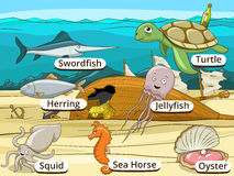 Underwater animals and fish with names Stock Photo