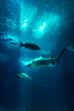 Underwater Aquarium View Fishes Shark Sun Rays Through Water Wil Royalty Free Stock Images