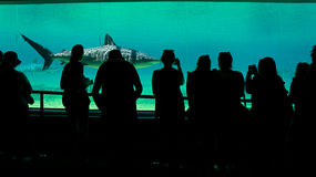 Underwater aquarium. A view inside an underwater aquarium with a shark in the aquarium and people watch as it swims by. Photo taken on: December 9th, 2013 Royalty Free Stock Photos