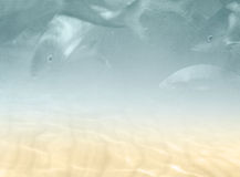Underwater background with fishes Stock Image