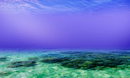 Underwater Background in the Sea Stock Image