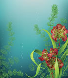 Underwater Background with sea plants. Royalty Free Stock Photo