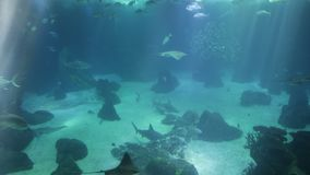 Underwater background with sunbeams stock video footage