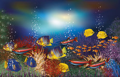 Underwater background tropicals fish Stock Images