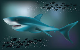 Underwater background with White Shark, vector Stock Images