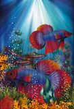 Underwater banner with Betta Splendens and Cardinal Tetra fish, vector i Royalty Free Stock Photography
