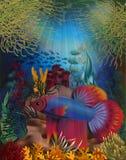 Underwater banner with Betta Splendens Thai fighting fish. Vector illustration Stock Image