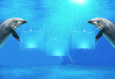 Underwater Banners With Dolphins Stock Photo