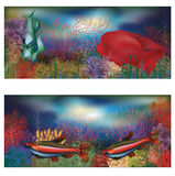 Underwater banners with red tropic fish Stock Photos