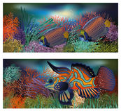 Underwater banners with tropic fish Stock Photo