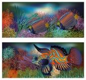 Underwater banners with tropic fish. Underwater banners with tropical fish, vector illustration Stock Photo