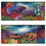 Underwater banners tropical fish Royalty Free Stock Images