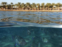 Underwater and beach. A view of the beach area and underwater at the Red Sea Royalty Free Stock Photos