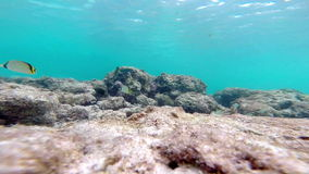 Underwater: Beautiful coral at the bottom of the ocean with curious fish stock video footage