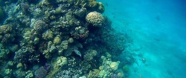 Blur semicolor Coral reef  in Red Sea. Underwater Blur semicolor  coral reef in the Red Sea Stock Photos