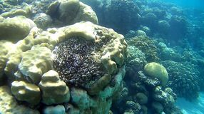 Blur semicolor Coral reef  in Red Sea. Underwater Blur semicolor  coral reef in the Red Sea Stock Photography