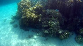 Blur semicolor Coral reef  in Red Sea. Underwater Blur semicolor  coral reef in the Red Sea Stock Photo