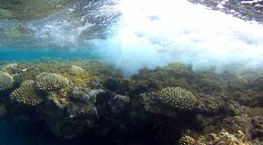 Underwater wave  colorfull Coral reef  in Red Sea. Underwater colorfull  coral reef with mirrow reflex effect on top of water with wihte air bubble wave in the Royalty Free Stock Photo