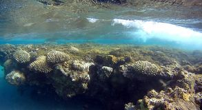 Blur colorfull Coral reef  in Red Sea. Underwater colorfull  coral reef with mirrow reflex effect on top of water with wihte air bubble wave in the Red Sea Royalty Free Stock Photography