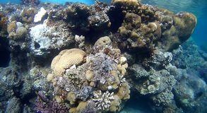 Blur colorfull Coral reef  in Red Sea. Underwater Blur coral reef with yellow,red,green hard and soft colorfull corals in clear blue water in the Red Sea Stock Images