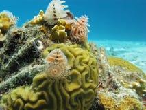 Underwater Bonaire Stock Image