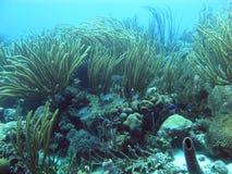 Underwater Bonaire Stock Photo