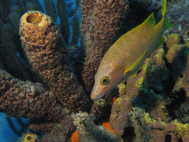 Underwater Bonaire Royalty Free Stock Photos