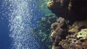 Underwater bubbles on an excellent background in Red Sea. Extreme sport in marine landscape, coral reefs, ocean inhabitants stock footage