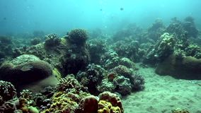 Underwater bubbles is going up from the sandy bottom  near Apo island. Pilippines stock video footage