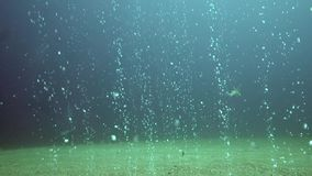 Underwater bubbles is going up from the sandy bottom  near Apo island. Pilippines stock video