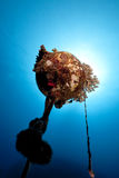 Underwater buoy with coral Royalty Free Stock Images